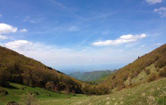Saoù forest, The Drôme, France